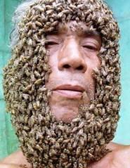 Barbe-abeilles