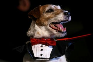 Uggie red collar