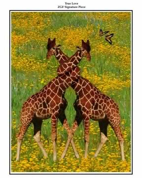 NeckingGiraffes