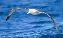 image from http://s3.amazonaws.com/hires.aviary.com/k/mr6i2hifk4wxt1dp/14061314/cc843b08-b422-4e8a-a04f-01b20b45802f.png