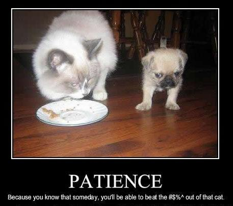 Patience 4