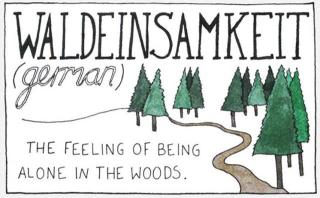 ELSA  Waldeinsamkeit