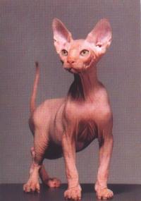 Skin a cat