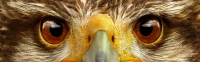 Eagle Eyes (1)
