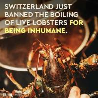 Carmella lobsters