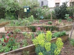 Carmella community garden