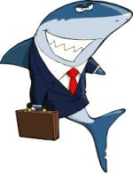 Cayman sharks